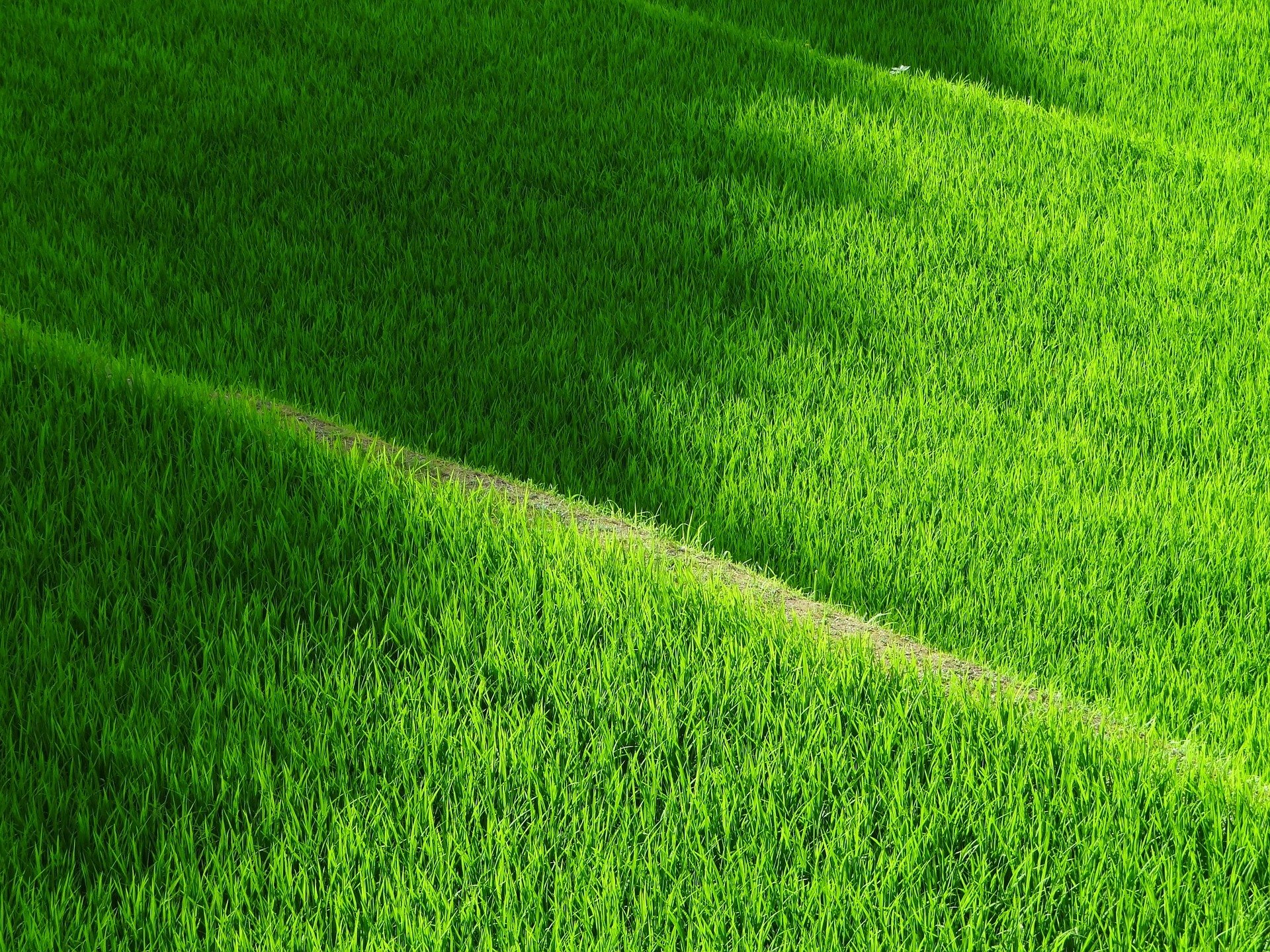 images of manicured grass